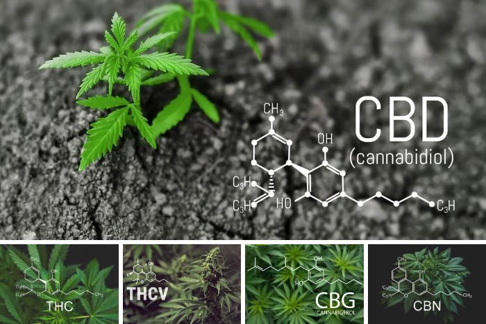 快速止痛,揭秘大麻二酚(CBD)缘何如此神奇