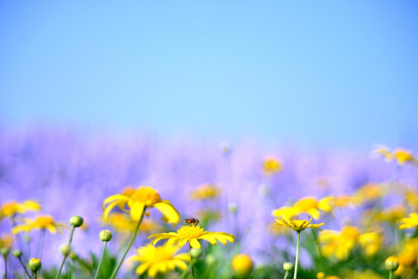 摄图网_500229824_清新的花(非企业商用)