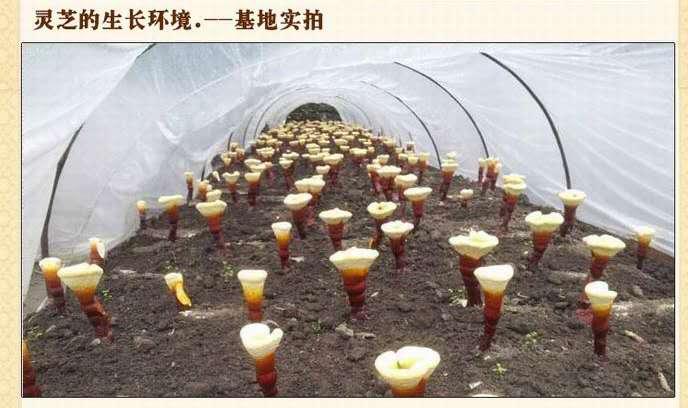 致匠心、大品牌、大投入——上海旭康生物科技有限公司
