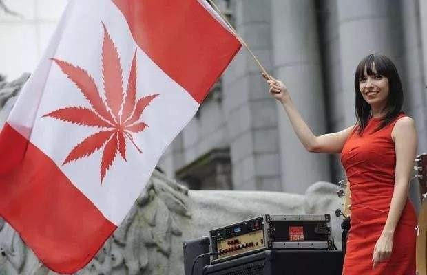 2020工业大麻行业发展扫描