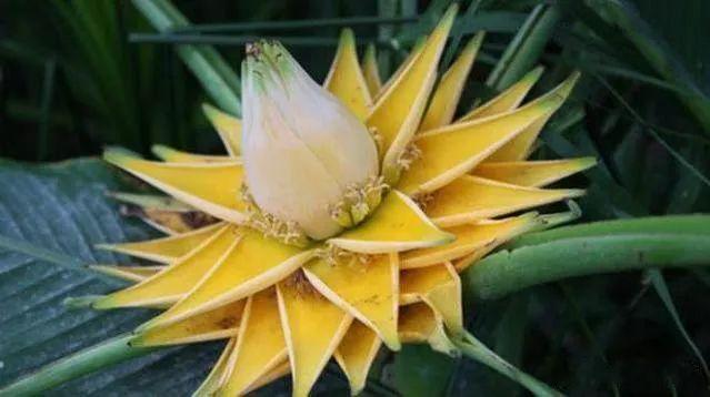 素可得:哪里有爱,哪里就有九品莲花!图1