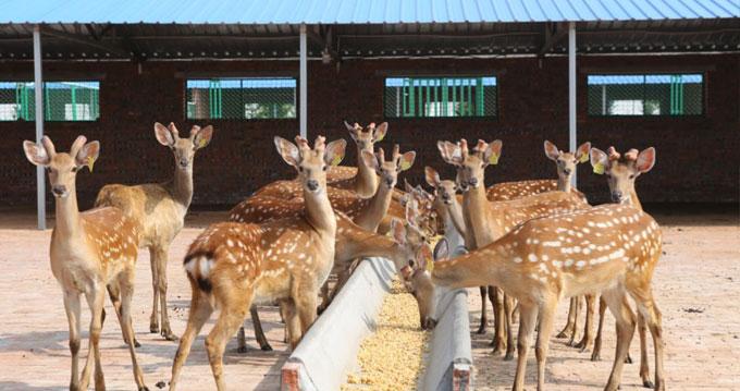 探访养生妙物,到鹿乡娄乐家,寻找最正宗的梅花鹿产品!