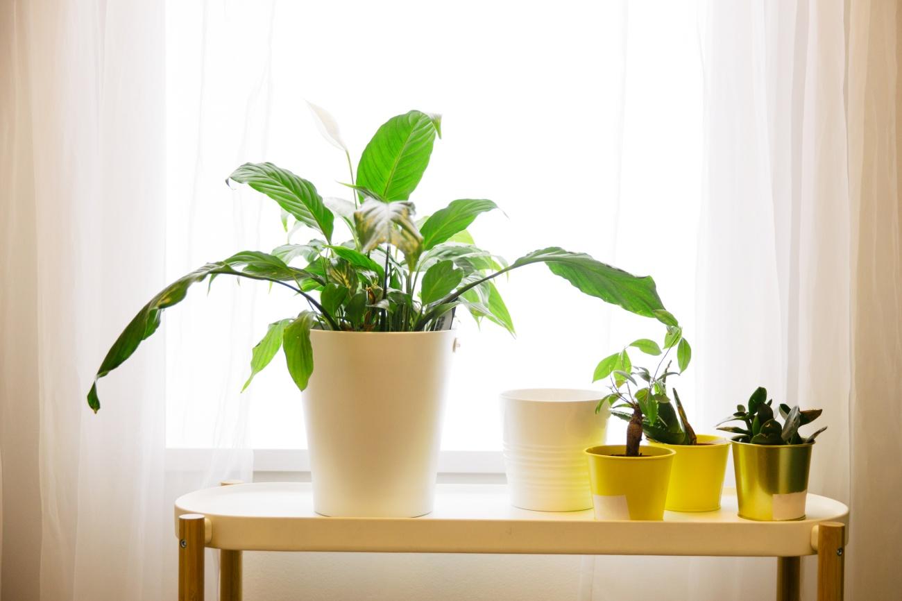 摄图网_500743175_清新绿色植物(非企业商用).jpg