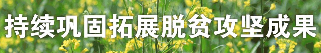 打造特色农产品产业链解决方案, 华盐集团为乡村振兴注入新动能!