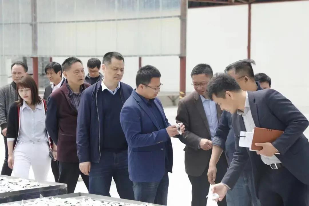全国人大常委会委员谢广祥一行领导,深入调研冰雪容黄精产业园