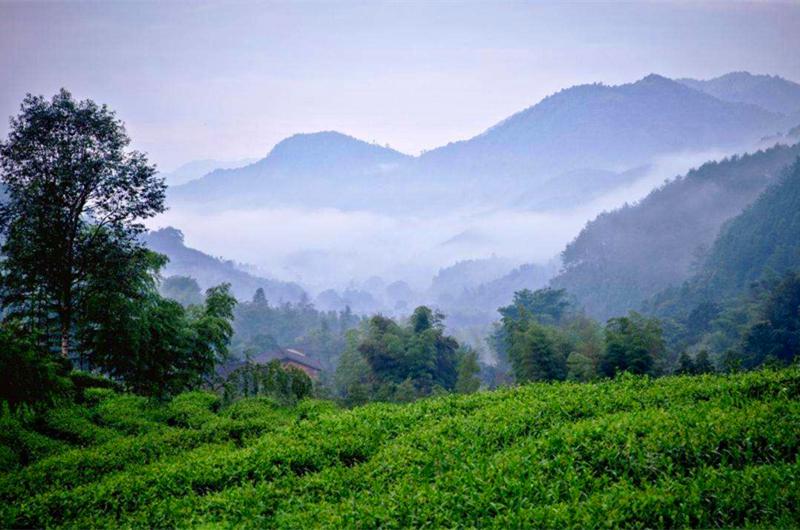 C:\Users\Administrator\Desktop\桌面\龙龙龙\第四周\新稿件\图片\龙叙堂茶业诠释中国名山茶新定义:名茶→名山茶→小名山茶\2.jpg