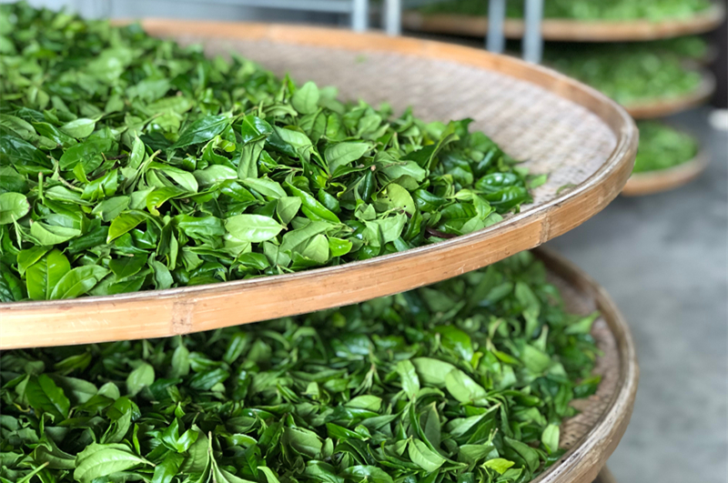 C:\Users\Administrator\Desktop\桌面\龙龙龙\第四周\新稿件\图片\龙叙堂茶业诠释中国名山茶新定义:名茶→名山茶→小名山茶\5.jpg